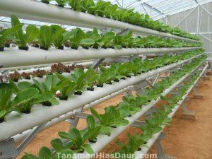 Peluang Usaha Agribisnis yang Hits dan Menjanjikan