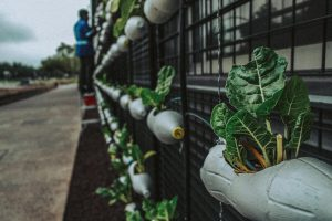 https://www.pexels.com/id-id/foto/agrikultura-alami-berkebun-botol-2505705/